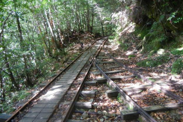 縄文杉トレッキングトロッコ道
