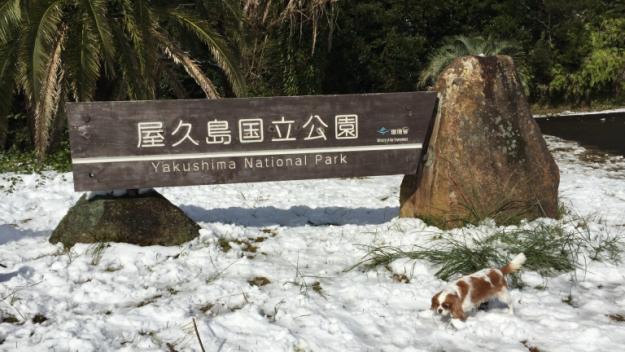 屋久島の冬の観光【冬のトレッキング】